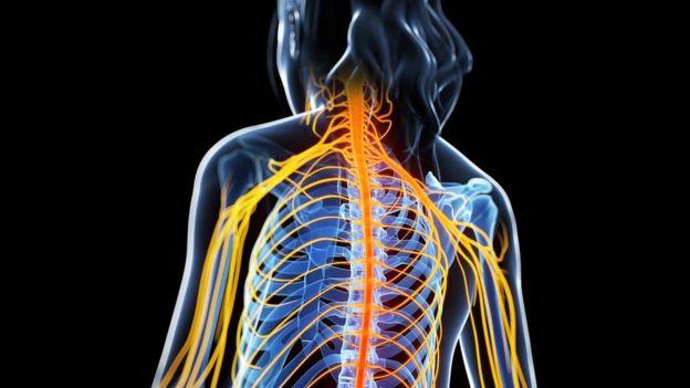 Ilustración de la EM atacando la médula espinal.