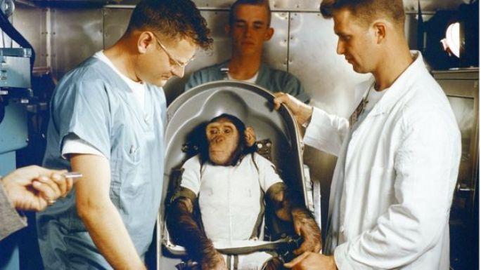 Un mono en una cápsula antes de ser lanzado al espacio.