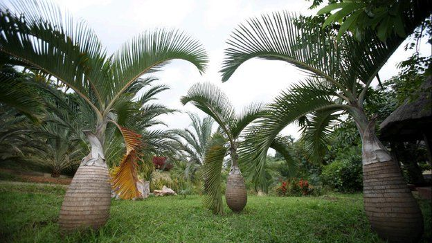 Image result for Sarius Palmetum Botanical Garden