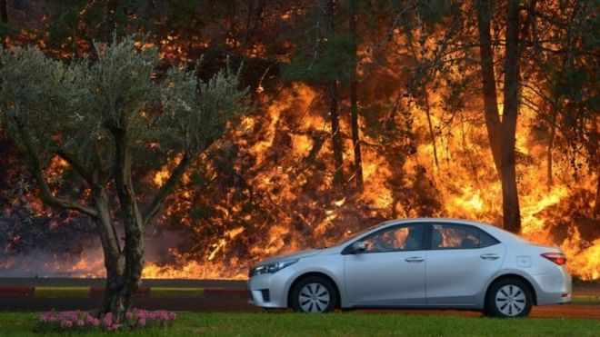 A car passes burning trees in a suburb of the coastal city of Haifa