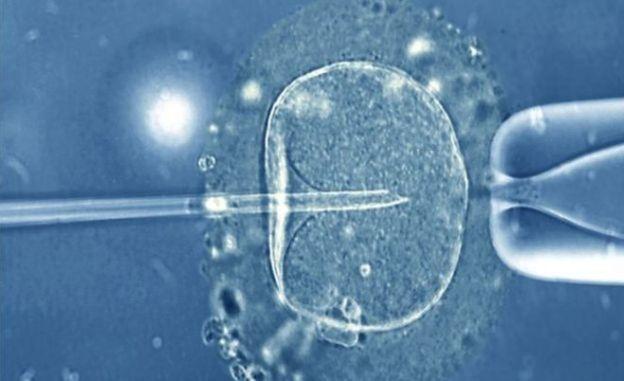 Esperma fertilizando un óvulo mediante una aguja fina.