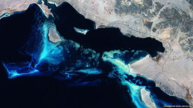 Corals off Saudi Arabia