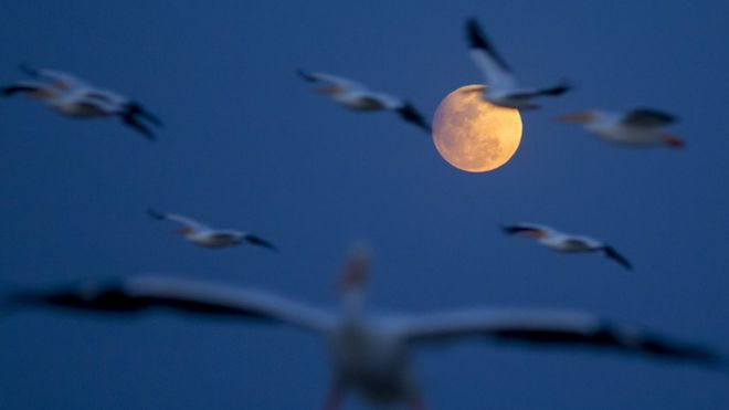A view of the Moon during a penumbral lunar eclipse as birds fly in the sky over the island of Petatan, in the municipality of Cojumatan, Michoacan State, Mexico