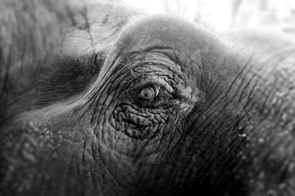 عين لفيل في الأسر