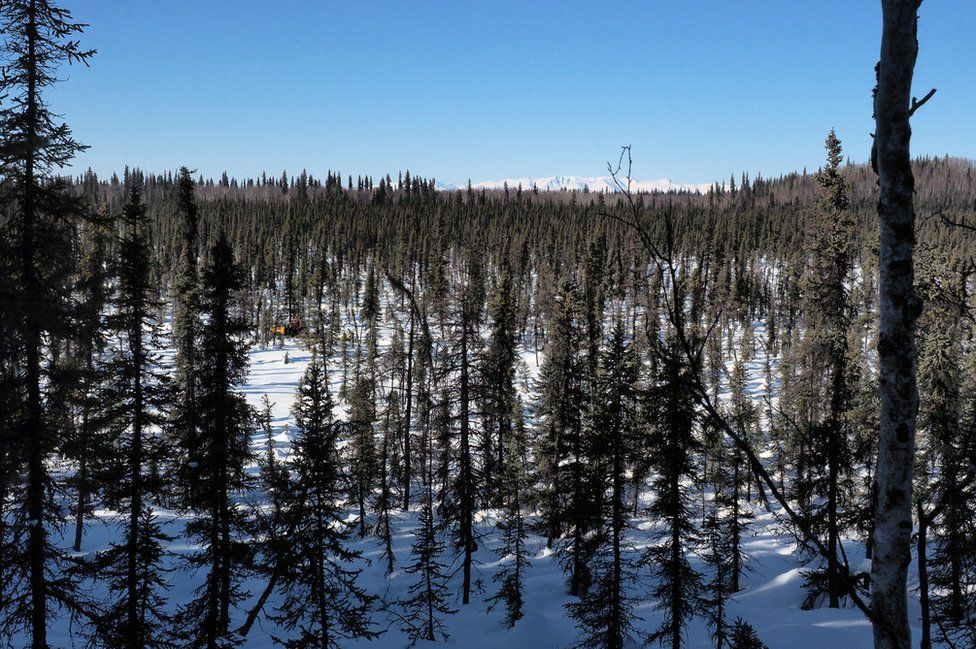 The Alaskan trees and landscape