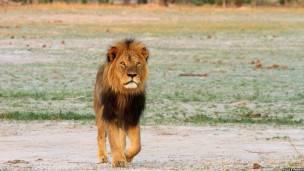 león cecil de zimbabue