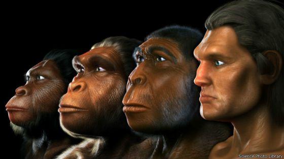 Resultado de imagen de evolucion humanos