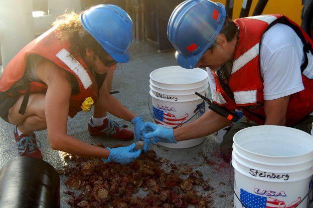 En dos expediciones, una en 2012 y otra en 2014, se encontraron con una variedad de esponjas, corales y peces de arrecife