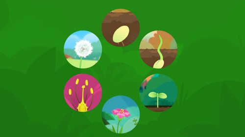 small resolution of what are the stages of a plant s life cycle part of