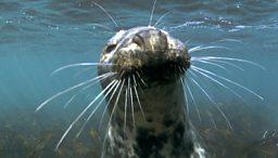 BBC Two - Britain's Secret Seas - British Sea Creatures