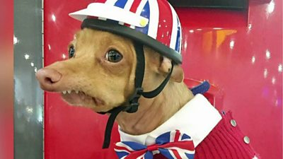 How Tuna the dog became an Instagram star - BBC News