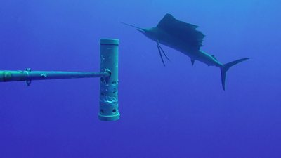 World's largest ocean monitoring system BRUVS launched #world #BBC_News