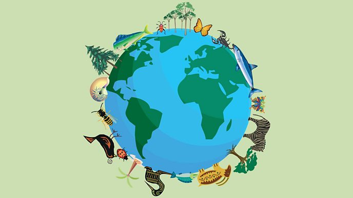 An illustration of the world with animals and fauna around the outside
