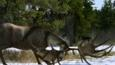 Irish elk with antlers lowered in a snowy woodland
