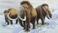 Woolly mammoths during the last Ice Age