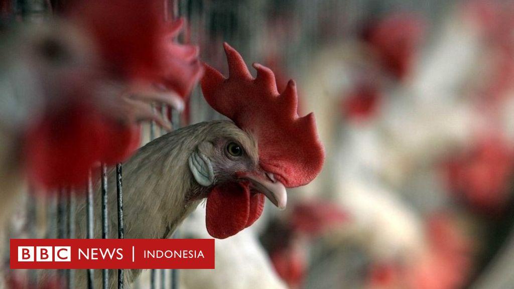 Virus flu burung: China laporkan kasus virus H5N1 di provinsi ...