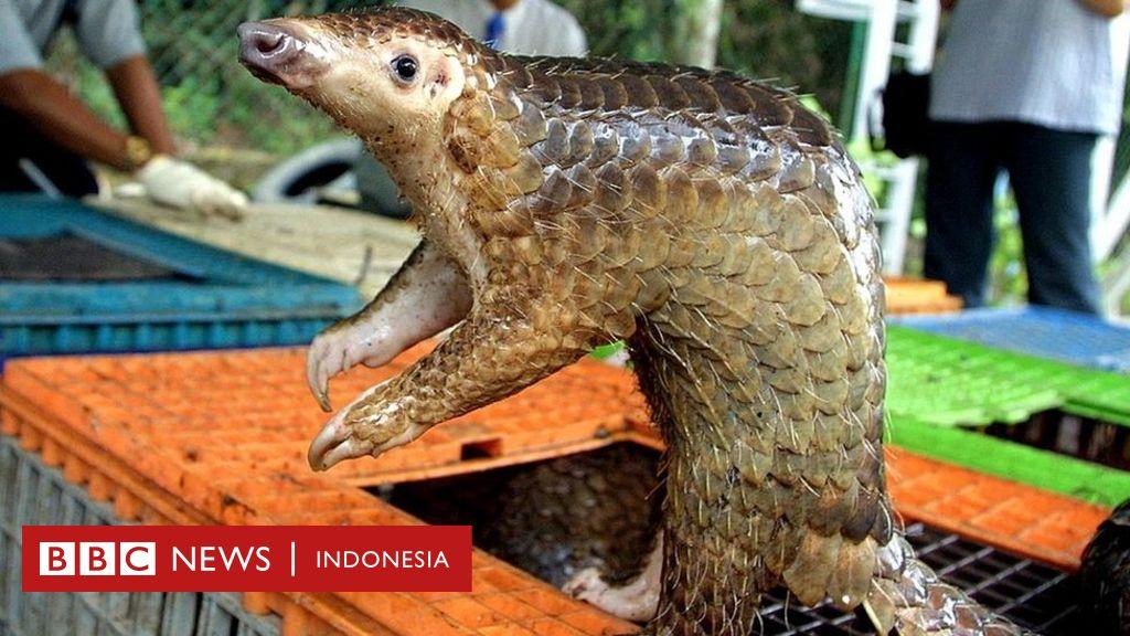 Virus corona: Berpacu menemukan hewan yang jadi sumber penularan ...