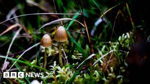 Psilocybin: Magic mushroom compound 'promising' for depression #world #BBC_News
