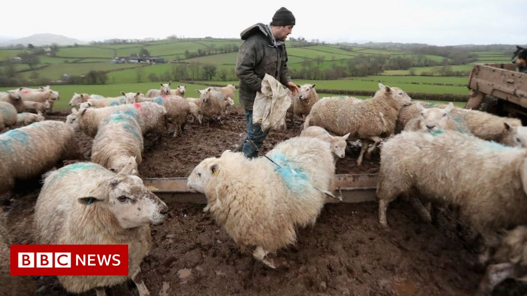 , US lifting ban on imports of British lamb, says Boris Johnson, The Evepost BBC News
