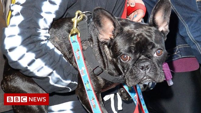 'A very close call': Lady Gaga's dog-walker tells of ordeal #world #BBC_News