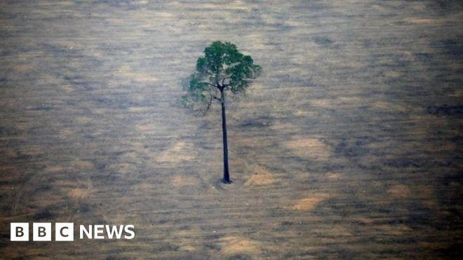 Brazil 'needs bn to reach zero emissions' says minister #world #BBC_News