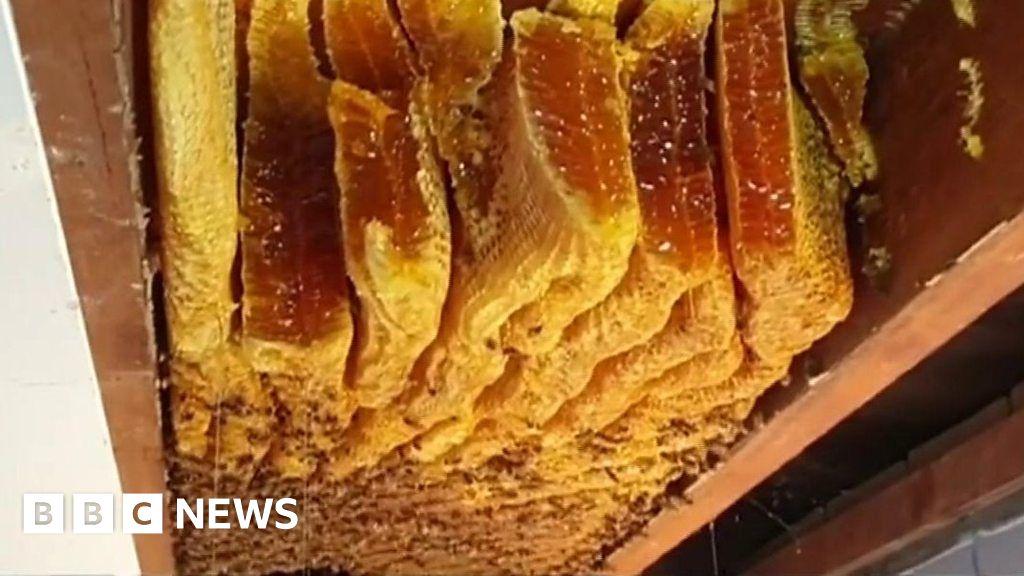 huge beehive discovered inside