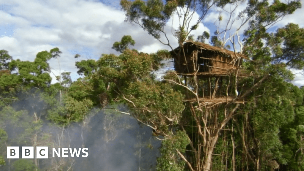 Human Planet Tribe S Treehouses Not Real Home Says Bbc Bbc News