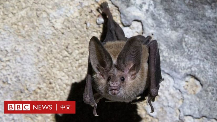 A bat pictured in a cave in Cuba