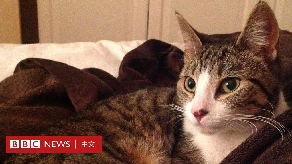 「小小的聖誕奇蹟」:英國貓咪走失5年後與主人重逢 - BBC News 中文