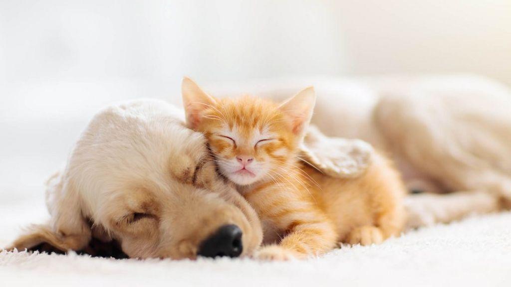 Can My Dog Or Cat Catch Coronavirus Bbc News