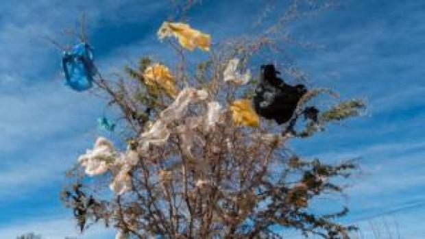 Plastic bags are stuck on a thorny bush in San Pedro de Atacama, Chile