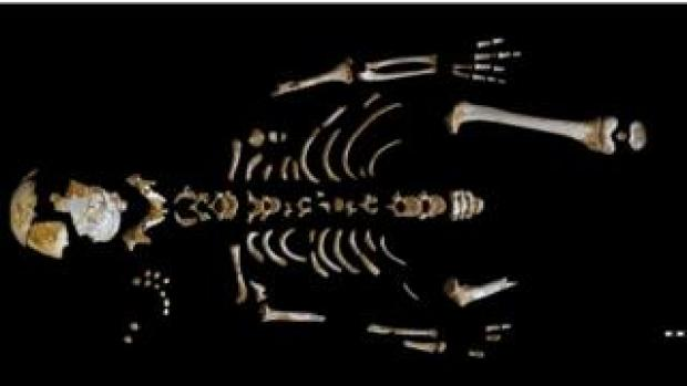 Skeleton of the Neanderthal boy recovered from the El Sidrón cave (Asturias, Spain).