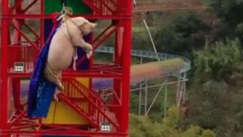 Screenshot of a pig forced to bungee jump
