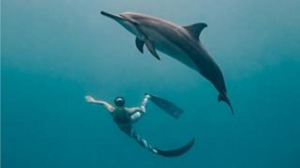 A snorkeler and dolphin  Coronavirus: Surf photographer on 'stark' lifestyle change  112577696 makenzie and the dolphin maui hawaii 2017