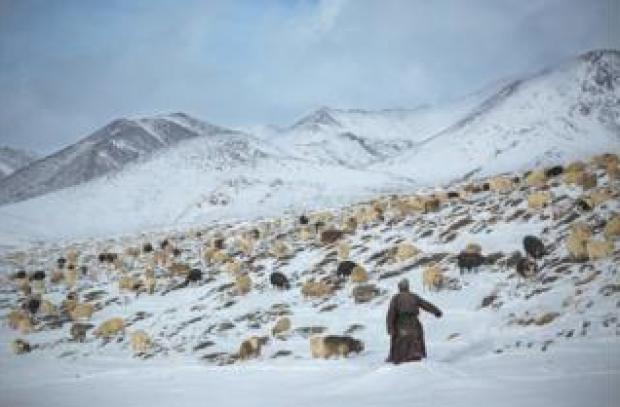 A shepherd with his goats on a snowy mountainside