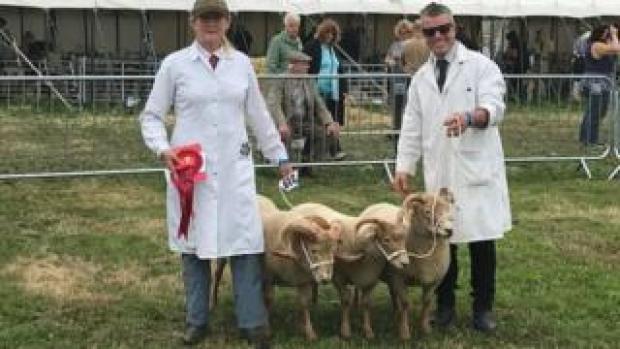 Sarah and Darren Rashley showing their Portland sheep