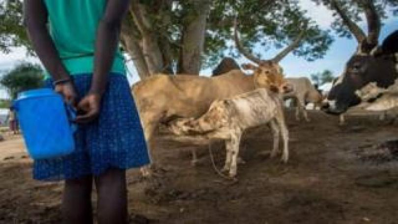 Women and cattle were abducted
