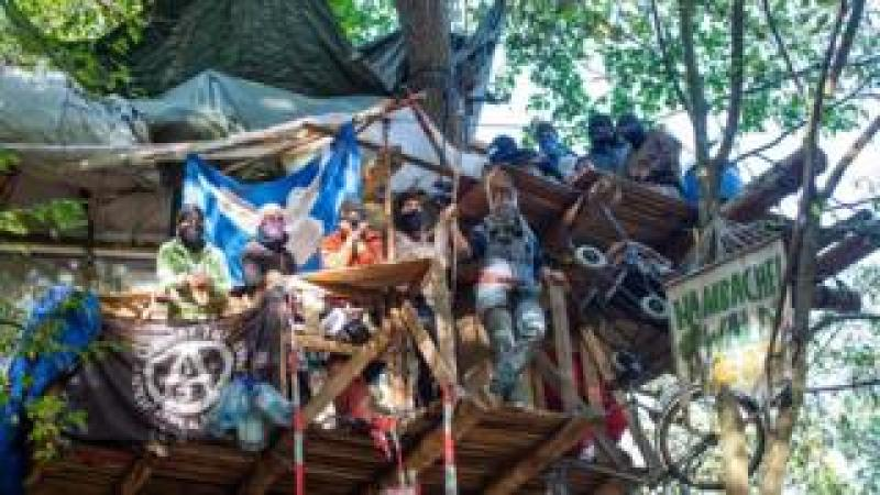 activists in a treehouse