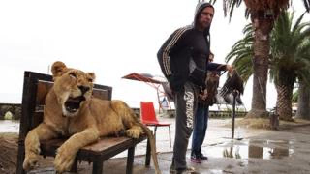 A man and his lion, at the Black Sea, Abkhazia