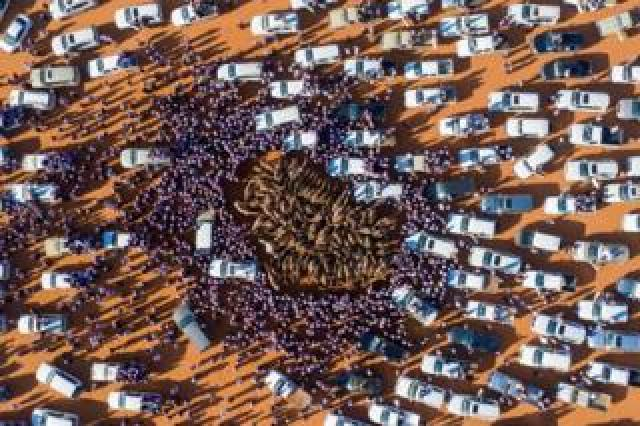 Cars and people surround camels
