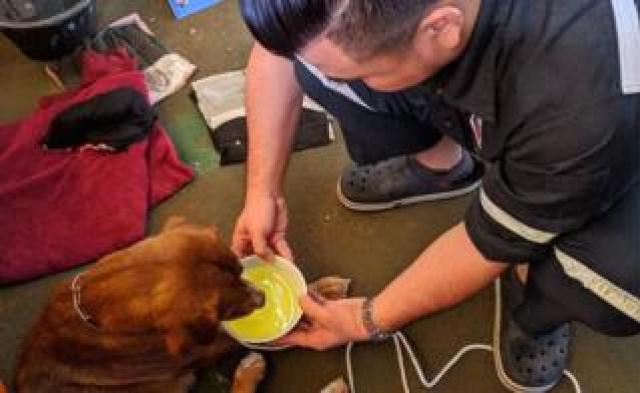 The dog was temporarily cared for on the oil rig