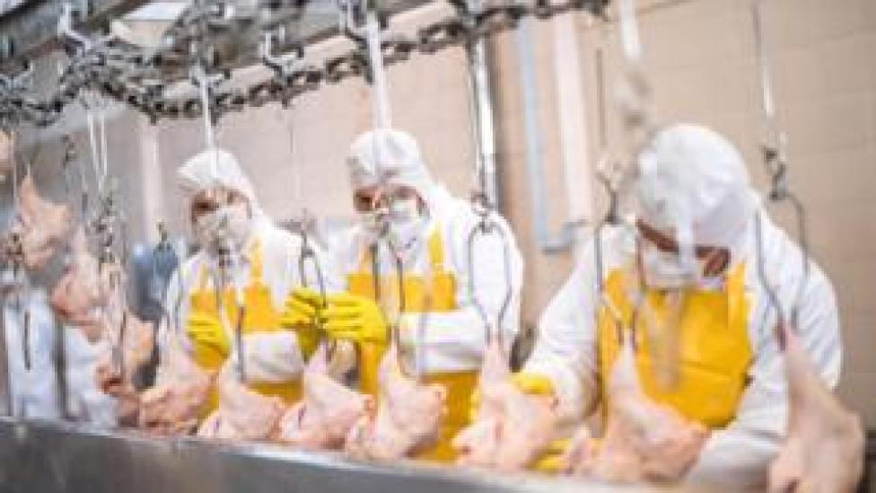 Chicken Processing - Broth