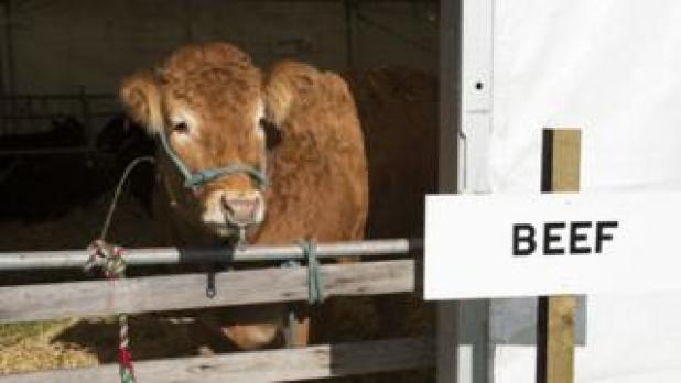 """Cow at agricultural show with sign that reads """"beef"""""""