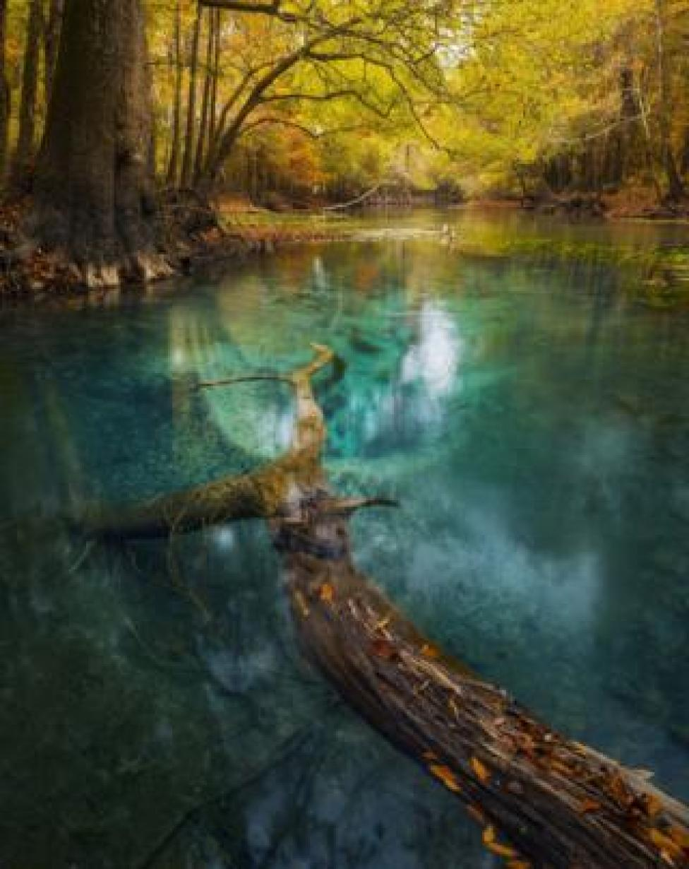 A view of a river in woodland