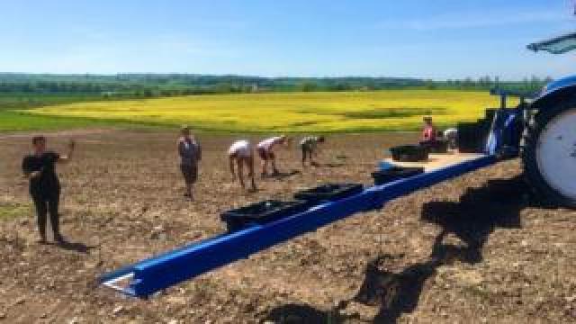 Pickers in the fields