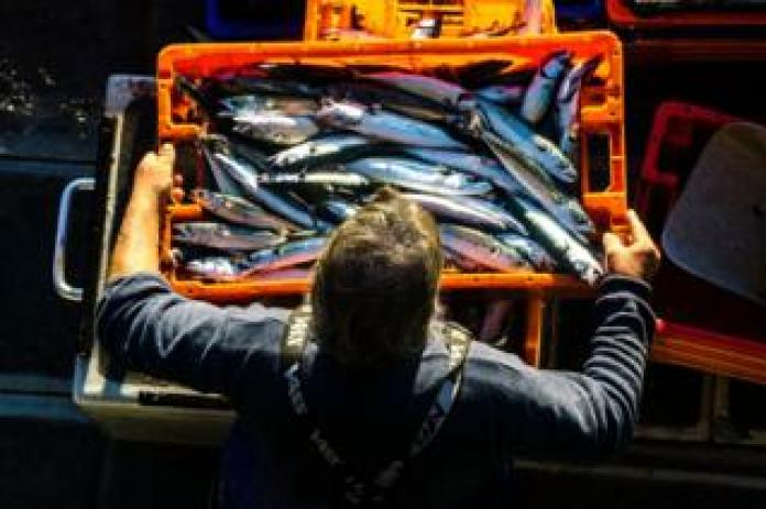 Fisherman with mackerel