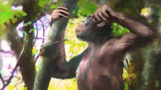 What the ape might have looked like