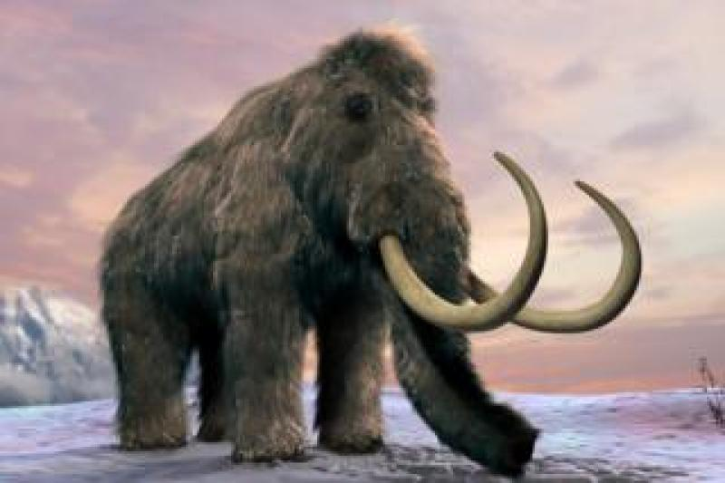 The woolly mammoth (Mammuthus primigenius), or tundra mammoth