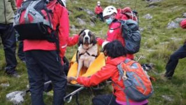 Daisy on a stretcher surrounded by rescuers