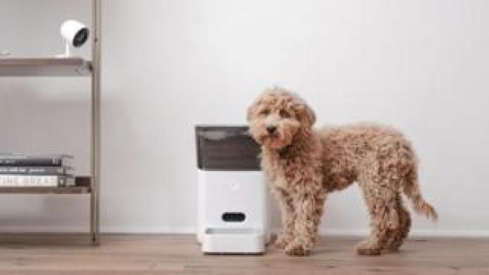 Petnet feeder and dog